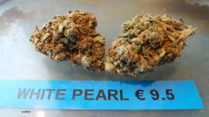 WHITE PEARL Willie Wortel's Indica Coffeeshop