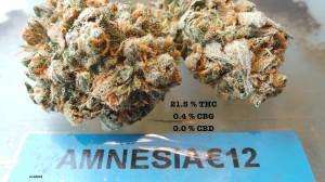 Willie Wortel's Indica Coffeeshop AMNESIA