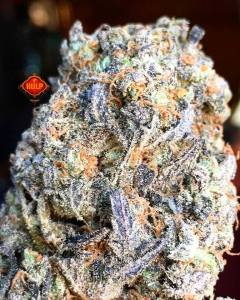 #Cinderella99 #Weed #Weedporn #W420 #Haze4Breakfast #Perfection #Purps #Packed #Trichomes #HighGrade #HighQuality #Sweet #FlavorBomb #HighGrade #HighQuality #1ehulp #Amsterdam #StonersParadise #BestInT