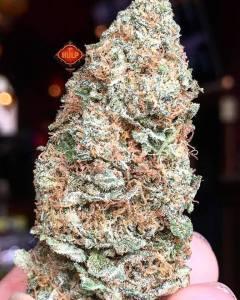 #GorillaGlue4 🐵🔥 #Weed #Weedporn #W420 #Perfection #Packed #Loud #Trichomes #Dank #FlavorBomb #HighGrade #HighQuality #Haze4Breakfast #1ehulp #Amsterdam #StonersParadise #BestInTown