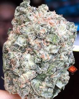 #KandyKush 🔥🔥🔥 #Weed #Weedporn #W420 #Perfection #Packed #Loud #Trichomes #Dank #FlavorBomb #HighCBD #HighGrade #Haze4Breakfast #1ehulp #Amsterdam #StonersParadise #BestInTown