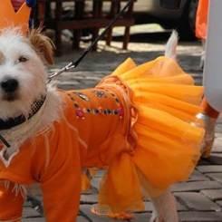 KING'S DAY Oranje AMSTERDAM