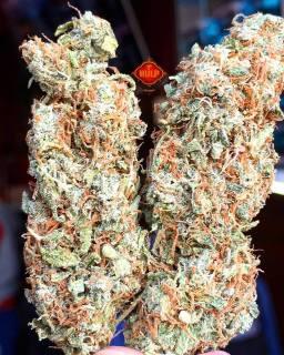 #MexicanHaze #Amazing  #Weed #Weedporn #W420 #Mexican #Haze #Perfection #Packed #Loud #OldSchool #Fruity #HighGrade #HighQuality #Haze4Breakfast #