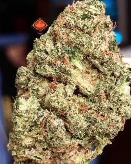 #ToxicHaze from @ripperseeds #Weed #Weedporn #W420 #Haze #Perfection #Packed #Loud #Dank #FlavorBomb #HighGrade #HighQuality #Haze4Breakfast #1ehulp #Amsterdam #StonersParadise #BestInTown
