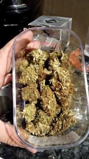 Bagheera Coffeeshop weed 2