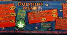 Coffeeshop DOLPHINS 2018 FEBRUARY